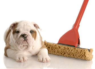 Pets and Your Home | Novi